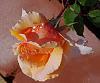 Deep Peach