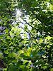 Leaves and starburst