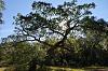 Coastal Bottomland Forest and Habitat [6 IMG]