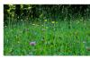 A Slide Show of Meadow/Flowers