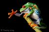 Red Eyed Tree Frog series pt 2..or 3