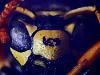 Sunlit Wasp
