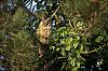 For Charlie - a long-eared owl with the Quantaray