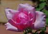 I Think Pink!