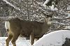 Winter Wildlife (many photos)