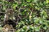 White Faced Monkeys - 10 Large Pics