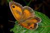 Butterflies and flies