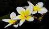 Trio of Blossoms
