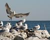 A Couple Beach Birds