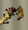 Prospecting Bee