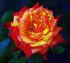 Love those Roses.