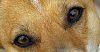 Look deep into my eyes!