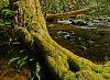 Natures Lumberjack