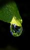 Scene on a Leaf