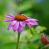 Flower (resized)