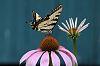 Flower/Butterfly