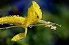 Dew Encrusted Flower