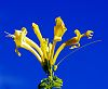 Yellow on Blue