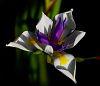 Newly opened Iris