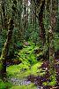 Weindorfer's Forest