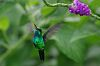 Hummingbirds of Costa Rica