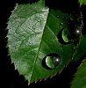 Pure Rain Drops