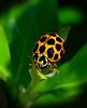 That Ladybird again.