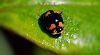 Hi I'm Batbug........