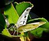 Balancing on a Leaf