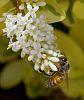 Pollen Treasure