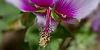 Bee Lure
