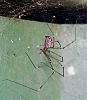 Another Spider for Rupert