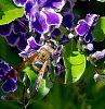 A Flower Wasp
