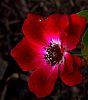A Subtle Red........