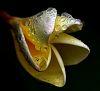 Droplet patterns..........