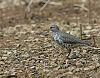 East TN Springtime 3/3 - Spring birds