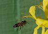 Bee-ing on Target