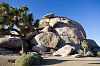 Cap Rock, Joshua Tree