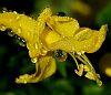 Encrusted in Drops