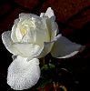 Super White........