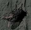 Grey Striper in Grayscale