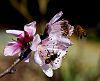 Popular Blossom