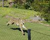 San Diego Zoo Safari animals