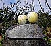 pumpkin bidet