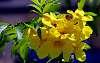 A hidden Bee.........