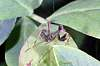 U have heard off Cro-Magnon , this is chrome-mantis
