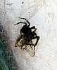 Death of a Cicada