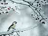 A Chickadee's Frozen World
