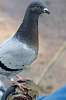 Pigeon toe