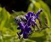 I smell nectar..........